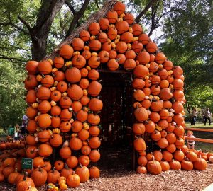 Harvest season begins at Cheekwood with yet another Pumpkin House