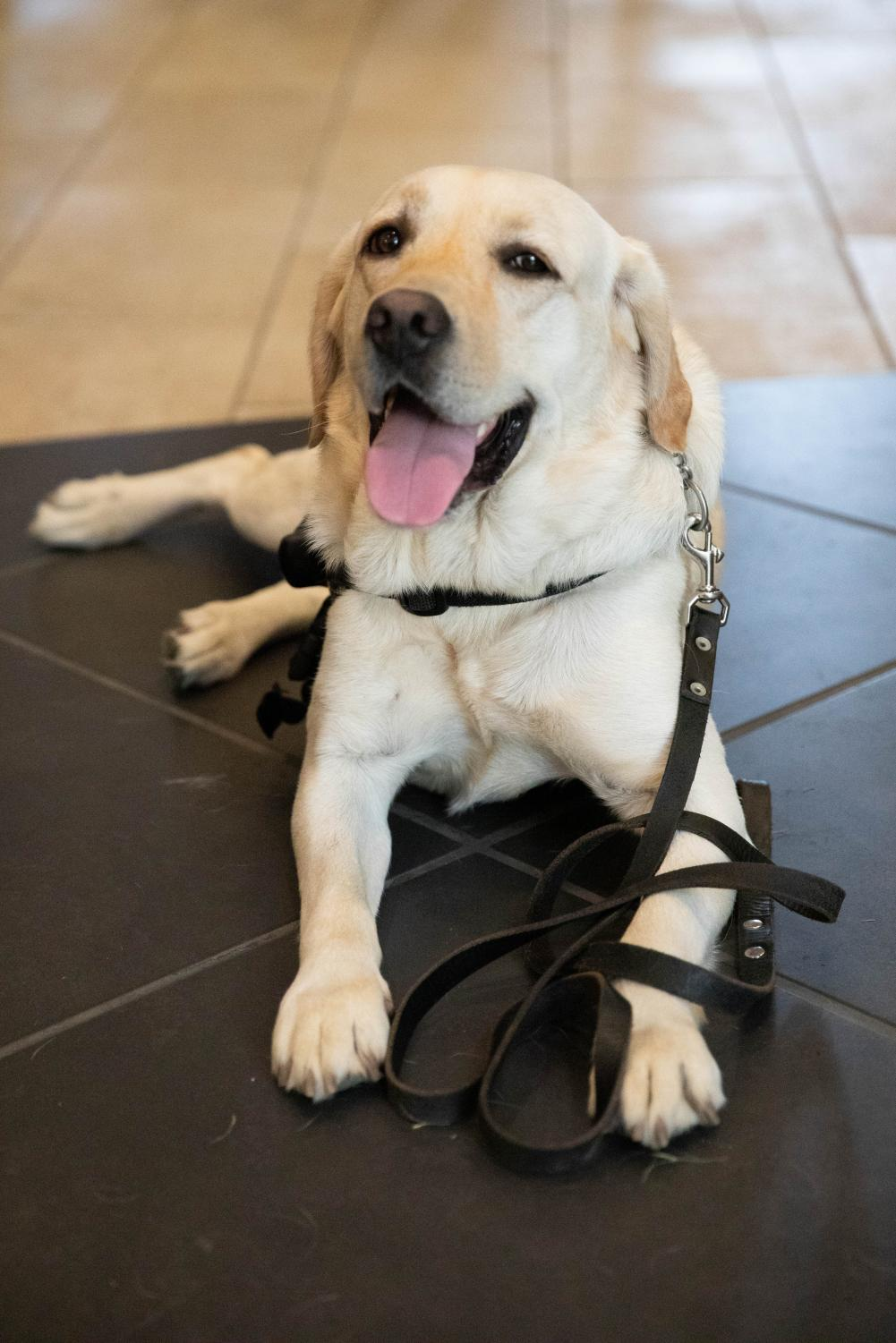 K9+Officer+Jack+welcomes+the+Class+of+2023+to+Vanderbilt+on+Saturday%2C+August+17%2C+2019.+%28Photo+by+Emily+Gon%C3%A7alves%29