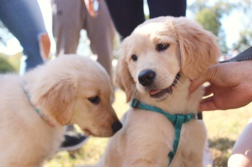 Cute aggression helps balance out extreme emotions and encourages people to take care of those deemed cute. (Photo courtesy Portia Jones)