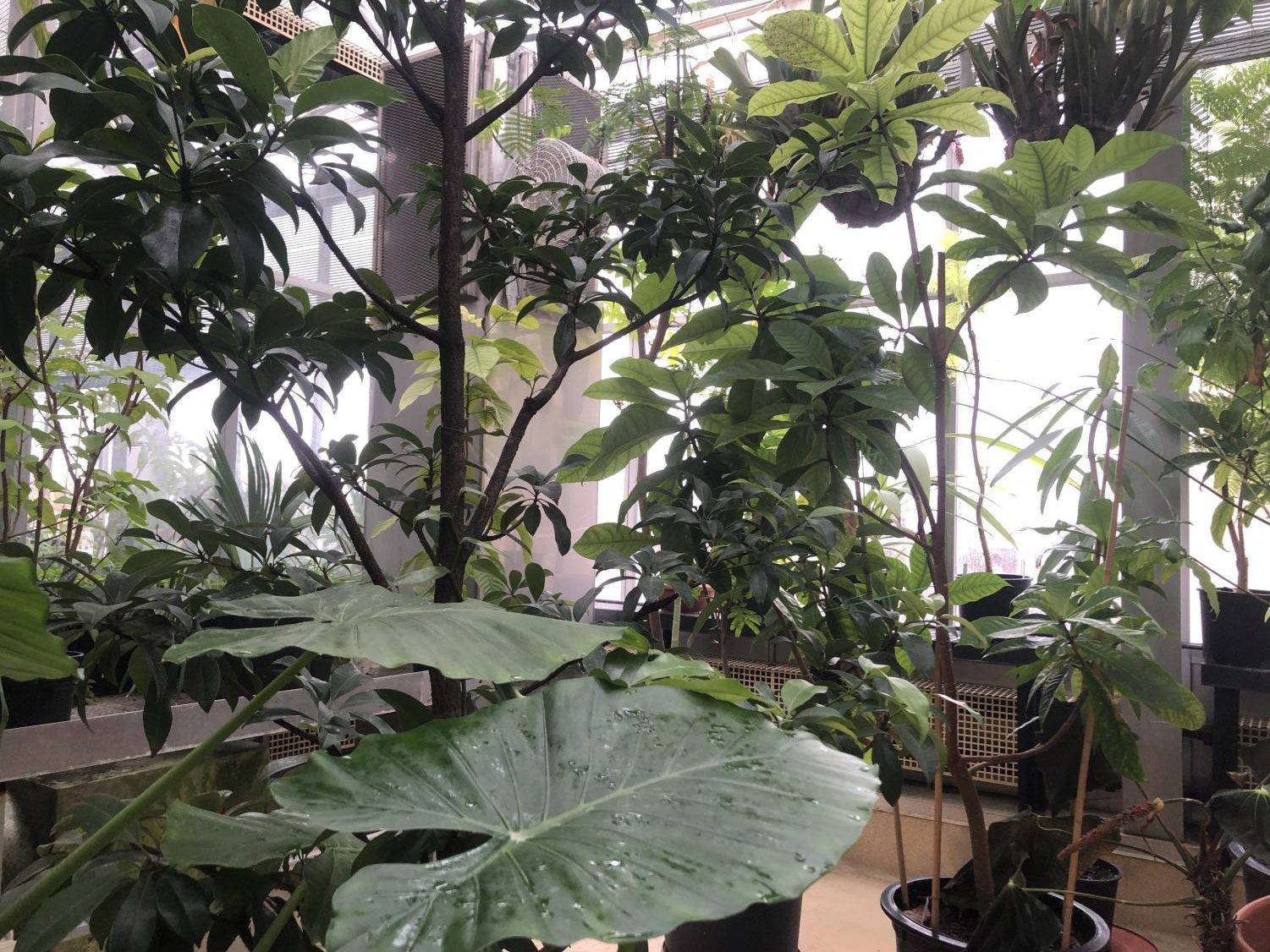 The greenhouse's seven rooms, five of which students can visit, are home to approximately 1,500 unique plant species