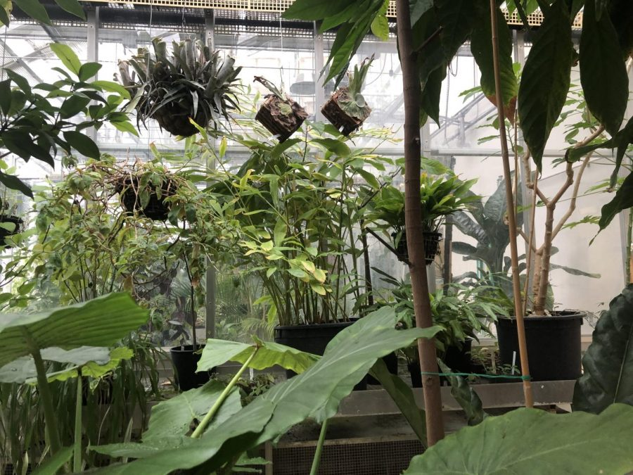 Plants hang from ceiling in one room of the greenhouse