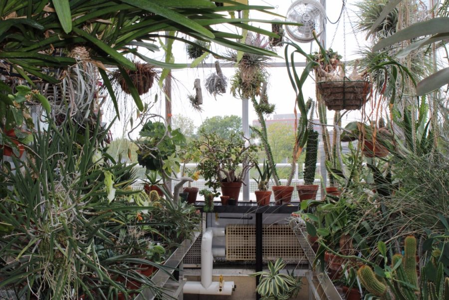 One of the rooms in the Stevenson Center greenhouse with succulents, hanging plants, and light