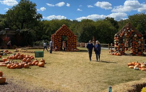 Pumpkin Village at Cheekwood Estate in Nashville (Hustler Staff/Sophie Price)