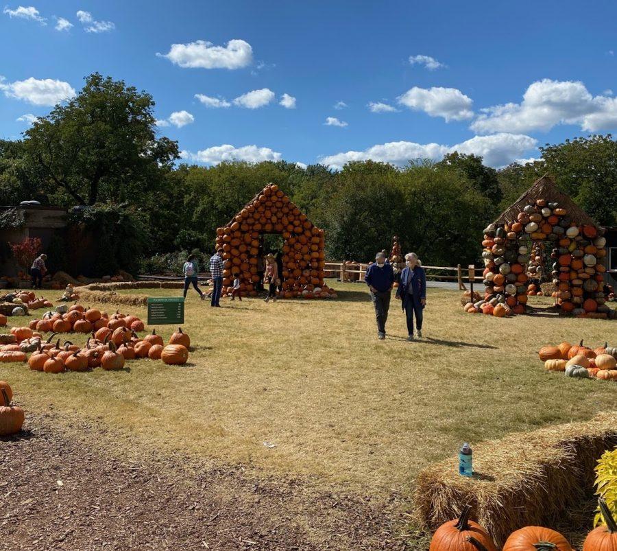 Pumpkin Village at Cheekwood Estate in Nashville (Hustler Staff/Sophie Price)