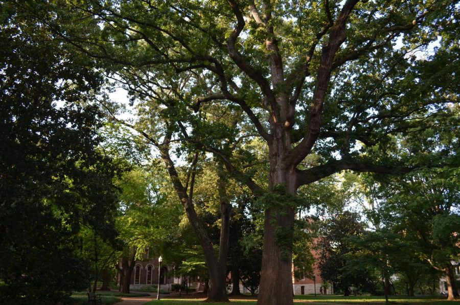 Image+of+trees+around+campus