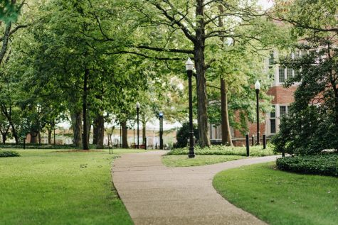 2 paths on campus; green trees and grass