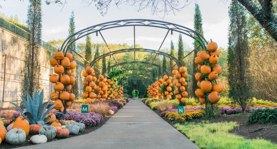 Is it possible to decorate everything with pumpkins? Cheekwood Harvest answers with a resounding yes. (Photo from cheekwood.org)