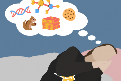 Why we dream: The science behind mind-movies