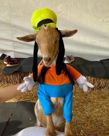 goofy goat